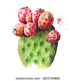 Prickly pear cactus or Indian fig opuntia with red fruits. Watercolor hand drawn illustration, isolated on white background