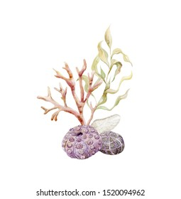 Print with seaweeds and shells. Underwater world watercolor decoration.