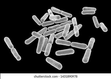 Probiotic bacteria Bacillus clausii, 3D illustration. B. clausii is a rod-shaped Gram-positive aerobic bacterium used to restore microflora of intestine
