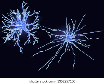 A protoplasmic (left) and a fibrous astrocyte. Protoplasmic astrocytes are found in the gray matter and the fibrous in the white matter of the brain. 3d rendering