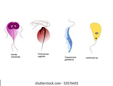 A trypanosoma gambiense egy parazita azaz