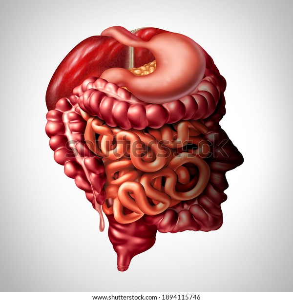 Psychology of digestion and human digestive gut brain connection concept as a liver pancreas with a stomach and large intestine and small intestines as a 3D illustration.
