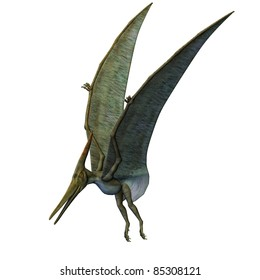 Pteranodon Dinosaur wings up landing. From the Late Cretaceous geological period of North America in present day Kansas, Alabama, Nebraska, Wyoming, and South Dakota, one of the largest pterosaur.