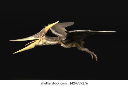 Pteranodon Longiceps Dinosaur flying black background side view 3d render