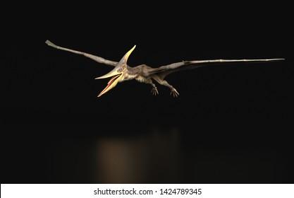 Pteranodon Longiceps Dinosaur flying black background isolated 3d render