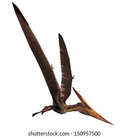 Pteranodon on White - Pteranodon was a reptilian bird from the Late Cretaceous of North America.