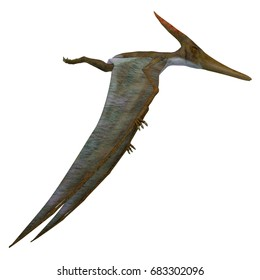 Pteranodon Reptile Side Profile 3d illustration - Pteranodon was a flying carnivorous reptile that lived in North America in the Cretaceous Period.