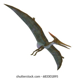 Pteranodon Reptile Soaring 3d illustration - Pteranodon was a flying carnivorous reptile that lived in North America in the Cretaceous Period.