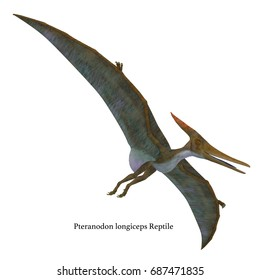 Pteranodon Reptile Soaring with Font 3d illustration - Pteranodon was a flying carnivorous reptile that lived in North America in the Cretaceous Period.