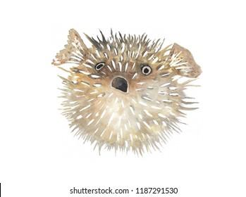 Puffer, blowfish watercolour, handpainted