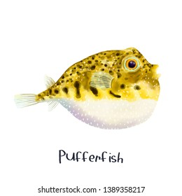 Pufferfish animal fish realistic illustration