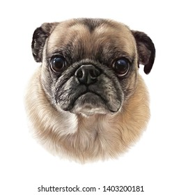 bffa242276b8 Pug dog isolated on a white background. Head of a puppy. Animal art  collection