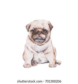Pug. Watercolor painting.