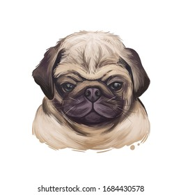 Puggle puppy digital art illustration of cute dog muzzle isolated on white. Crossbreed between Beagle and Pug, hand drawn cute pet portrait, canine animal, pedigree puggle dog breed, puppy head