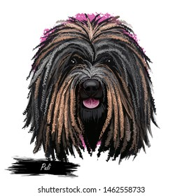 Puli dog portrait isolated on white. Digital art illustration of hand drawn dog web, t-shirt print and puppy food cover design. Breed of Hungarian herding livestock guarding dog with long, corded coat