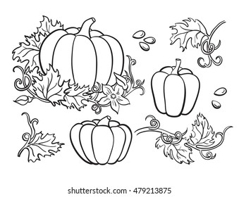 Pumpkin drawing set. Isolated outline  vegetable, plant, leaves, flower and seeds. Hand drawn harvest illustration.