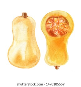 Pumpkin squash watercolor drawing on a white background. Drawing of the paints of food.