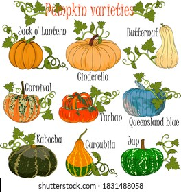 Pumpkin varieties performed in a colorful hand drawn format for illustrations at agricultural fairs in preparation for Halloween