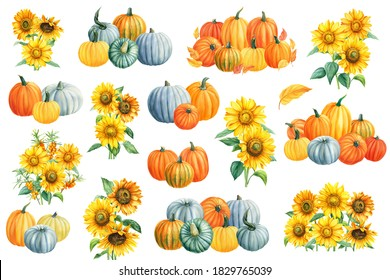 Pumpkins, sunflowers, sea buckthorn on a white isolated background. Autumn watercolor composition. Greeting card.