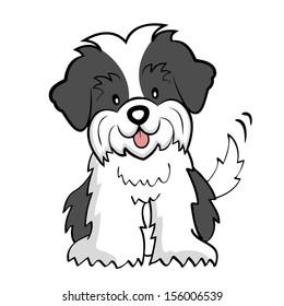Puppy cut Shih tzu isolated