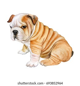 Puppy English bulldog isolated on white background. Cute realistic dog. Watercolor. Illustration. Template.