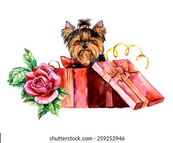 Puppy as a gift with rose. Yorkshire terrier looks out of a box. Pink roses and hair dress. Ridiculous puppy background, watercolor composition. Hand-drawing water color. Illustration.