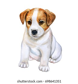 Puppy Jack Russell Terrier isolated on white background. Watercolor. Illustration. Picture. Clip-art
