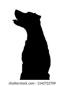 Pure Black and White Silhouettes of a Male Black Labrador Retriever dog begging for treats
