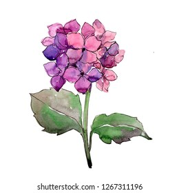 Purle hydrangea floral botanical flower. Wild spring leaf wildflower isolated. Watercolor background illustration set. Watercolour drawing fashion aquarelle. Isolated flower illustration element.