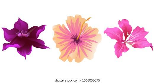 Purple Clematis. Pink Hibiscus. Pink Bauhinia Purpurea. Illustration. Isolated illustration element. Floral botanical flower. Wild leaf wildflower isolated. Exotic tropical hawaiian jungle.