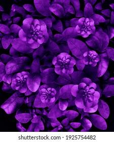 purple flower and leaf garden design