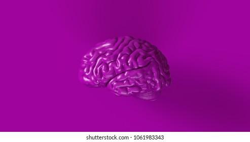 Purple Human brain Anatomical Model 3d illustration