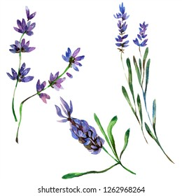 Purple lavender. Floral botanical flower. Wild spring leaf isolated. Watercolor background illustration set. Watercolour drawing fashion aquarelle isolated. Isolated lavender illustration element.