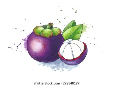 Mangosteen Draw Images Stock Photos Vectors Shutterstock