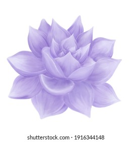 Purple succulent illustration digital watercolor side view on white background