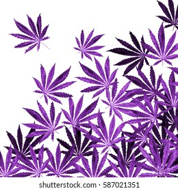 Purple, violet Cannabis leaves on white background. Hand drawn watercolor illustration of the plant Cannabis Sativa or Marijuana. Pattern with marijuana leaf for label, poster, web.