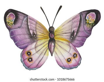 Purple with yellow and black butterfly botanical watercolor illustration design to element for decoration, trimming, grapic
