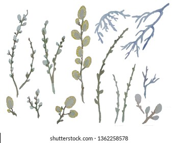 pussy willow branches on white background