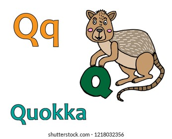 Q for quokka. The always smiling animal in the world, quokka is holding a letter Q.