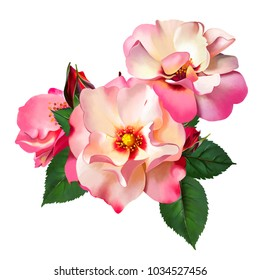 The Queen of passion, the delicate bouquet of luxurious roses as a watercolor illustration of summer background print. Three delightful white roses, with a red border on the edge, with petals and buds