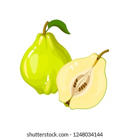 Quince isolated on white background. Bright  illustration of colorful half and whole of juicy quince. Fresh cartoon