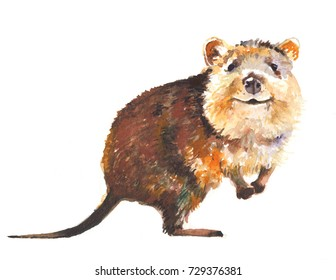 Quokka smiles. Watercolor hand drawn illustration at white background