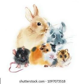 Rabbit, guinea pig, chinchilla, rat, hamster. Pets. Watercolor hand drawn illustration