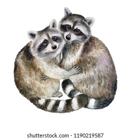 Raccoons embrace. Lovely loving animals in embraces isolated on white background. Watercolor. Illustration. Template. Hand drawing. Clipart. Close-up