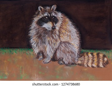 racoon brown black fur tail pastel tomcat,natural,up,look,eyes,prey,close,predator,green,hair,domestic,fur,beautiful,cat,animal,background,black,brown,chalkboard,closeup,cute,eye,face,mammal,nature