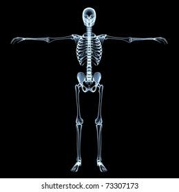 radiological image of the human skeleton - black background