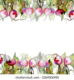 Radish wild vegetables  in a watercolor style frame. Full name of the fruit: Radish. Aquarelle wild vegetables for background, texture, wrapper pattern or menu.
