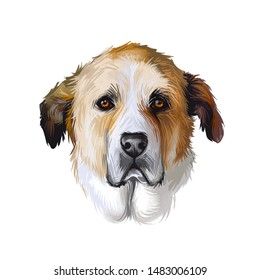 Rafeiro do Alentejo dog portrait isolated on white. Digital art illustration of hand drawn dog for web, t-shirt print and puppy food cover design. Portuguese Mastiff large breed of dog from Portugal