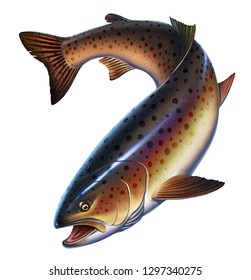Rainbow trout fish on white background realistic illustration. Trout delicacy. Wild river fish isolated. Large brown trout being.