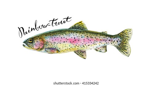 Rainbow trout fish whole isolated on a white background